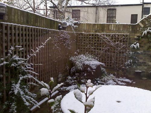 Snow in back garden