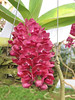 Flower Pink Orchid