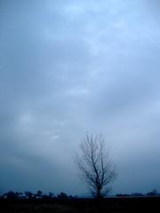 tree - by xxyx