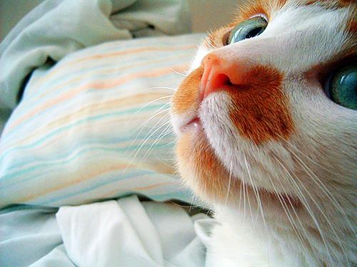 abner nose