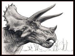 triceratops_the_matriarch