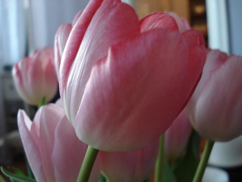 pink tulips in missy's apartment