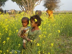 Childs of farmer (Iqbal.Khatri) Tags: life pakistan green eye art love colors beautiful yellow composition wonderful village child earth culture olympus crops farmer charming karachi childs sindh thatha villageculture abigfave internationalflickr sarsoon fe180 flickrdiamond sindhculture iqbalkhatri