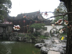 yuyuen branch (cararosa) Tags: shanghai yuyuengardens blossombranch