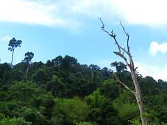 Впечатляющие джунгли