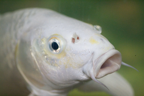The Fish that Reminds me of Confucious