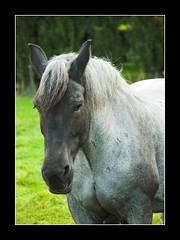 trait-02 (francklemeunier) Tags: horse cheval chevaldetrait