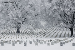 Winter Solace (Photography by Jenna) Tags: trees winter coastguard snow cold arlington dead army death bravo war iran military cemetary iraq wwi wwii sunday d70s navy middleeast honor sigma korea vietnam va mia nationalguard dcist brave snowing marines february airforce pow dying tombstones 2007 arlingtonva nationalcemetary specialforces arlingtonnationalcemetary 2470mm dessertstorm supershot winter2007 impressedbeauty globalvillage2 lpwinter