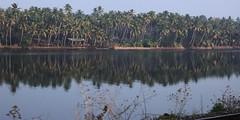 WaterWay (thejasp) Tags: india reflection water river coconut kerala indien southindia keralam southasia    indiatravel   indiatourism thejas   sdindien  zuidindia            suurindland