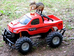 Fueling up for a tough ride (mysparetimedesign) Tags: camping wild animals trucks chipmunks monstertrucks funnyphotos lmaoanimalphotoaward