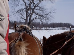 Horses (lockphilip) Tags: winter horses sleigh hangchilly