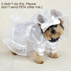 PETA Dog
