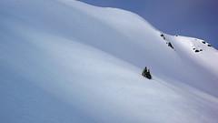 Jumbo Pass snow (xtremepeaks) Tags: winter snow canada mountains tree beautiful saveme bc searchthebest deleteme10 daily panasonic getty dozen bigmomma ngm gamewinner specland dmclx2 xtremepeaks bestminimalshot ngmdailydozen pregamewinner
