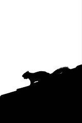 Sometimes You Feel Like a Nut (Tex Flix) Tags: rooftop silhouette squirrel bestviewedlarge highkey nut naturesfinest
