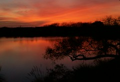 March 11, 2007 (~Suemil~) Tags: sunset lake reflection tree texas blueribbon wowed mywinner abigfave clute shieldofexcellence impressedbeauty beautyineyeofbeholder wowiekazowie ssmarch bestsunriseandsunset betterthangood
