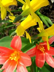 (_parrish_) Tags: flowers spring blumen blueten fruehling