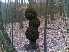 Cudno drvo