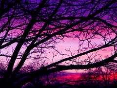 Good one tonight (Abizeleth) Tags: sunset tree backyard purple magenta superbmasterpiece 1on1colorfulphotooftheday 1on1colorfulphotoofthedayapril2007