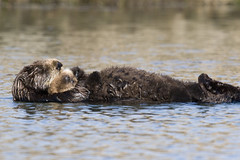 sea-otter-bay_13
