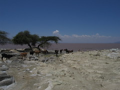 Lake Langano Rift Valley