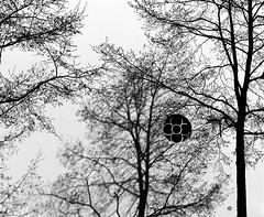 TREES - by Akbar Simonse