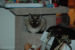 20061225 PA (lasertrimman) Tags: pa quin 20061225