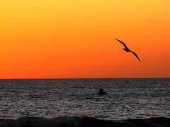 "A ""Jonathon Livingston  Seagull Moment"" -- Santa Monica, CA by Vaguely Artistic"