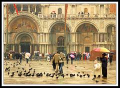 San Marco under the rain (S. Lo) Tags: street travel venice italy church rain umbrella italia cathedral pigeons venezia sanmarco thechallengefactory leuropepittoresque