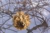 Winter Pod - Massachussetts (pomegranatecreations) Tags: bestnaturetnc06