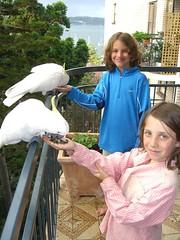 Caleb and Anna feed the Cockatoos