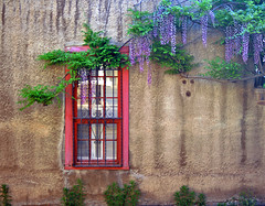 Roque Tudesqui House and Wisteria: Santa Fe, New Mexico (NM) (Floyd Muad'Dib) Tags: santa new flowers houses homes windows plants usa house plant newmexico santafe southwest flower home window wall america geotagged mexico us vines unitedstates united north vine american roque vegetation northamerica walls states fe nm northern wisteria americanwest santafenewmexico historicsite santafenm historicsites westernusa northernnewmexico tudesqui northernnm roquetudesqui roquetudesquehouse santafehouse santafehome santafehouses santafehomes wisteriasupport
