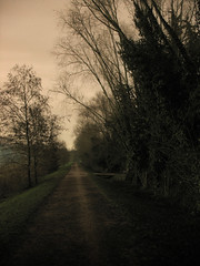 the goblin's walk (Nicola Zuliani) Tags: verde alberi night nicola path antico notte buio sile restera viale casier nizu zuliani nicolazuliani nizuit wwwnizuit
