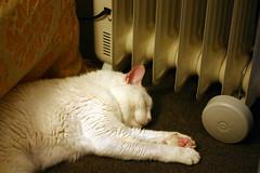 louise & heater (lawatt) Tags: sleeping white cat warm louise furryfriday mariposa spaceheater