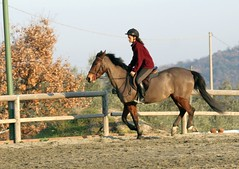 IMG_1569 (montalgeto) Tags: horse sheila gallop patrizia