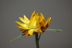 Flowers/Christchurch Botanical Gardens NZ