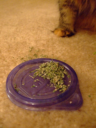 Kitty Weed