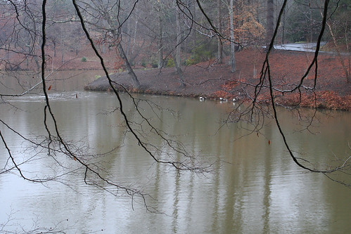 rainy pond #6