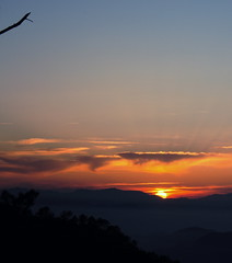 Rama-Branch (ibrotons (aka irlandainquieta)) Tags: sunset sky españa sun sol atardecer spain branch cielo rama castellon bartolo rayosdesol ignaciobrotons ignaciobrotóns kjsxksx3 lhlehoir3
