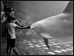 Friends (Andrea Cucconi) Tags: family friends love beautiful children aquarium kid interestingness amazing interesting famiglia dolphin great favorites bimbo faves amici amicizia amore acquario italians delfino bambino blueribbonwinner 25faves andreacucconi impressedbeauty