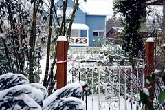 the garden gate in the snow