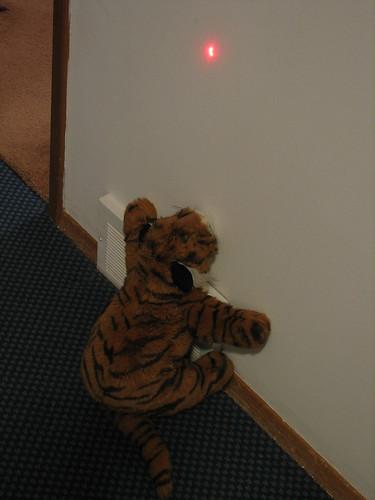 Luring tiger 2
