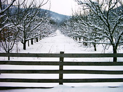 Winter dream (mark.os) Tags: trees winter snow nature fence san serbia dream orchard zima plums srbija sneg sumadija ograda stragari superaplus superbmasterpiece ljivik