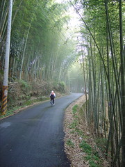 在竹林裡騎車