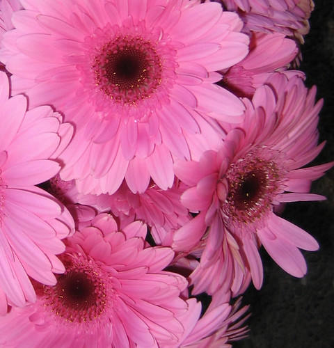 gaggle of gerbera.....