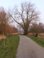 Path and tree (Kris Elshout) Tags: holland tree netherlands path dordrecht biesbosch