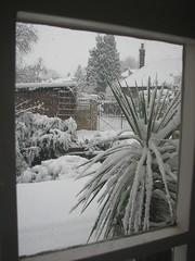 IMG_3146 (simon renton) Tags: england snow berkhamsted