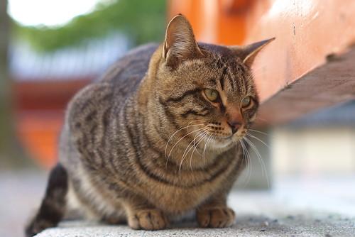 Today's Cat@20070211