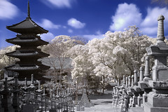 Pagoda dreams (IR) (EugeniusD80) Tags: blue sky white japan clouds photoshop ir temple pagoda nikon pi nagoya infrared nikkor hoya helluva hoyar72 yagoto supershot 18200mmf3556gvr cotcpersonalfavorite d80 outstandingshots koshoji abigfave perfectangle 30faves30comments300views impressedbeauty diamondclassphotographer flickrdiamond frhwofavs