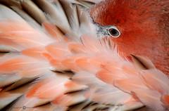 Baby Flamingo (Melissa_A) Tags: baby nature d50 zoo nikon outdoor flamingo feathers young nikond50 naturesfinest melissaa splendiferous specanimal abigfave flickrgold impressedbeauty aplusphoto