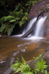 Water and a Log (danpalmer) Tags: green waterfall australia bluemountains explore nsw wentworthfalls empressfalls